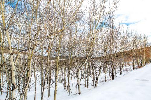 yukon canada snow