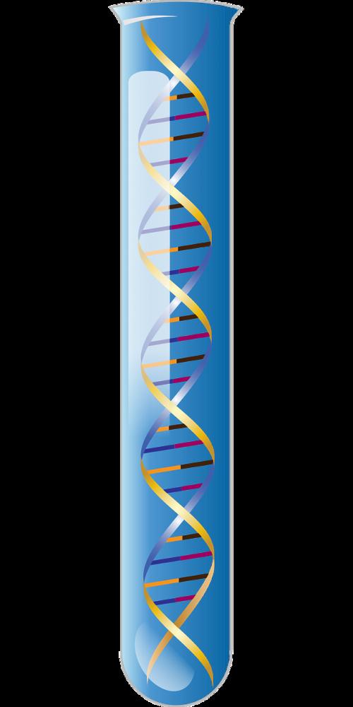 z deoxy ribonucleic acid left hand double helix alternate geometry
