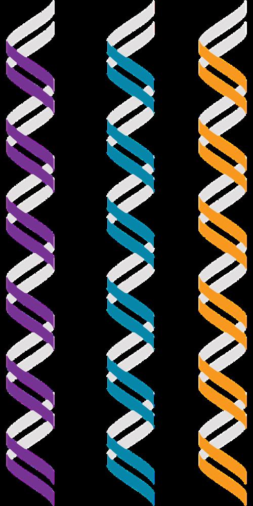 z-dna left-handed double helix alternate geometry