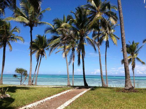zanzibar sea palms