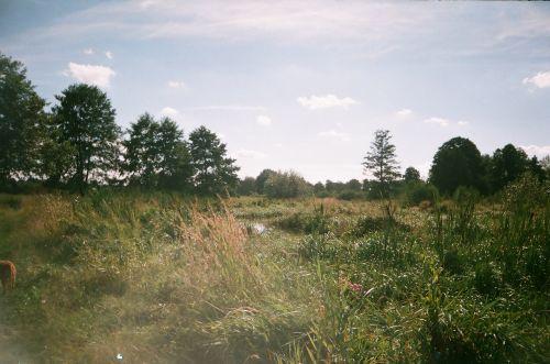 Scrub Near Lublin