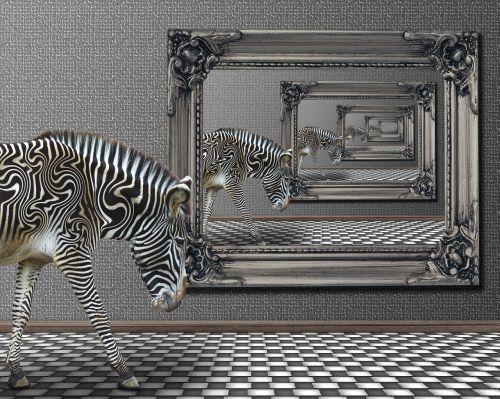 zebra zoo animal