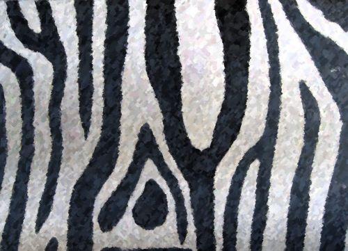zebra zoo coat