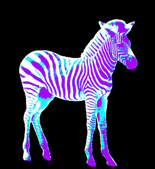 zebra colorful art