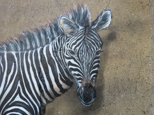zebra wall art wall