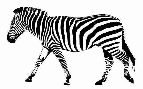 Zebra Black White Stripes