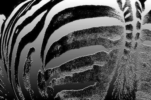 Zebra Invert Pattern