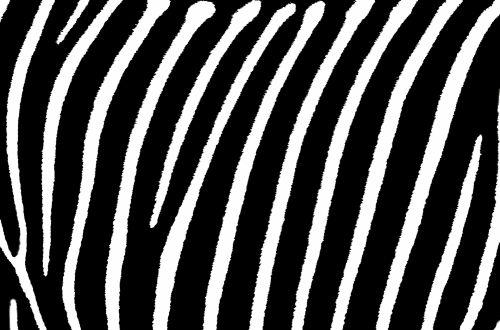 Zebra Stripes Background Wallpaper