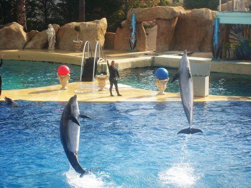 zoo marineland dolphin