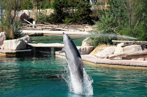 zoo animals nature