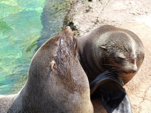 zoo sea lions animals