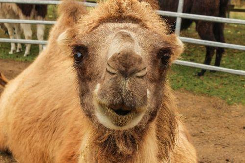 zoo camel circus