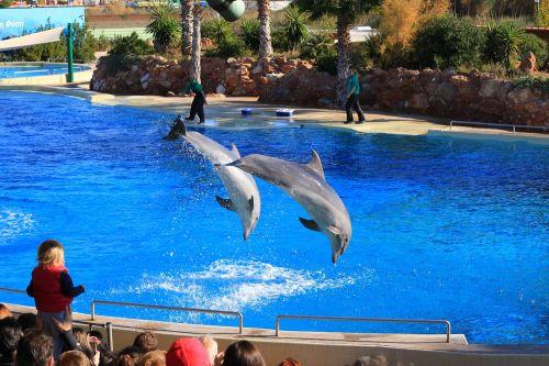 zoo animals dolphins