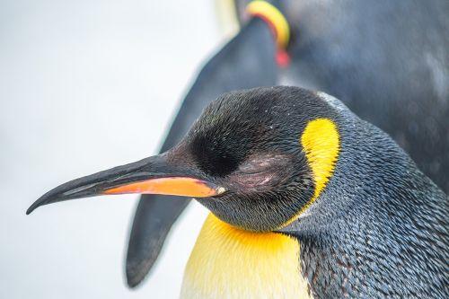 zoo penguin animal