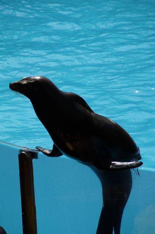 zoo sea lion strong