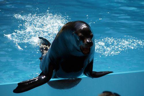 zoo sea lion males
