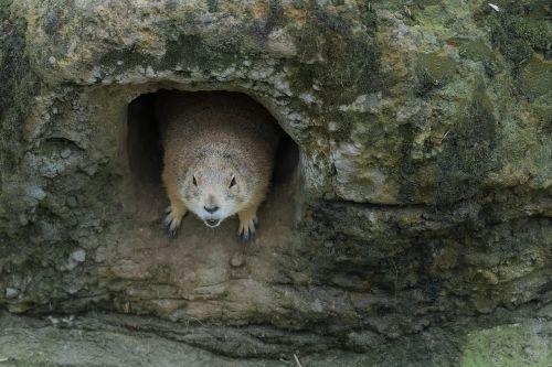 zoo doorkeeper bouncer
