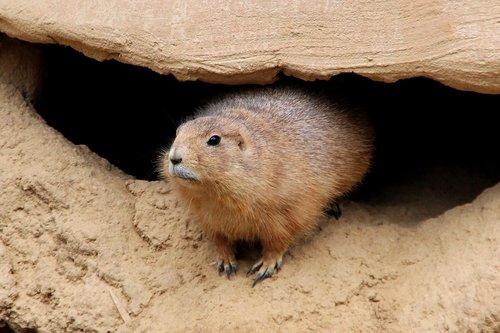 zoo  marmot  animal