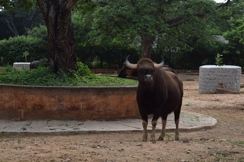 zoo  mysore  tourist place