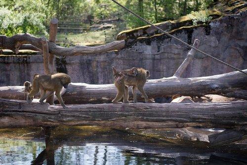 zoo  tiergarten  tiergarten nürnberg