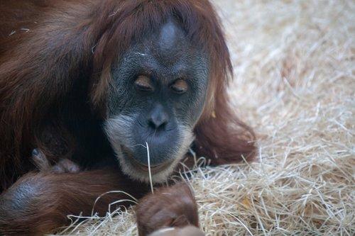 zoo  wildlife  portraits
