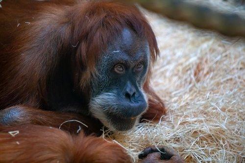 zoo  portraits  monkeys