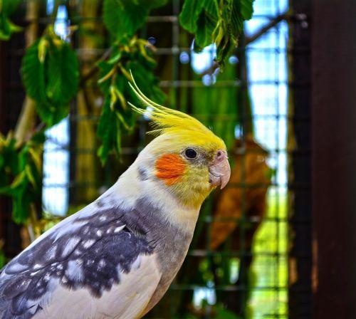 zoo animal bird