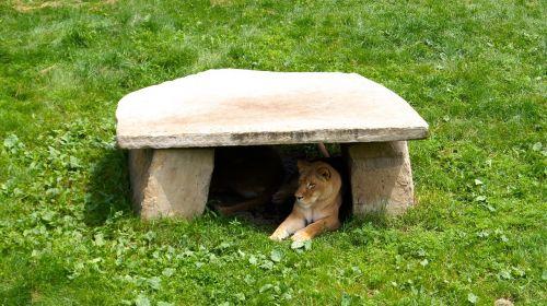 zoo animal nap