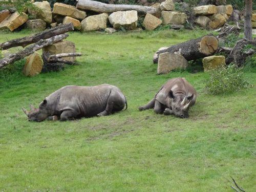 zoo leipzig rhino