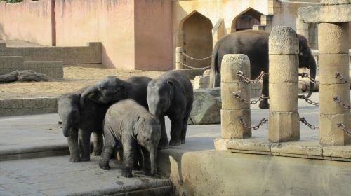 zoo hannover jungle palace elephant