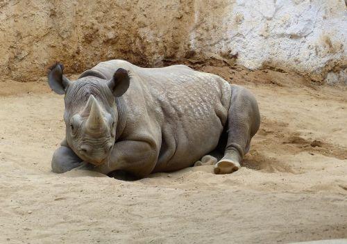 zoo magdeburg makibo magdeburg